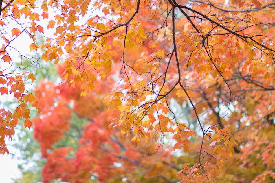 Monde et Mode | October Colors